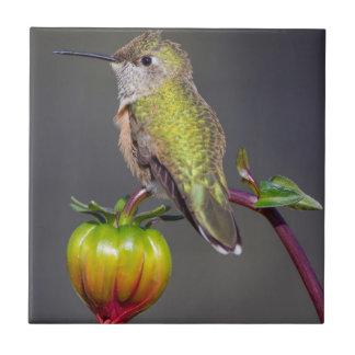 Carreau Repos de colibri sur le bourgeon floral