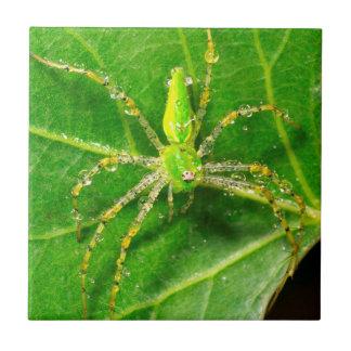 Carreau Rosée sur une araignée verte de Lynx