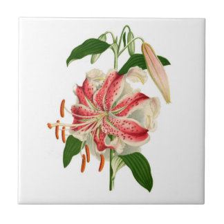 Carreau Rubrum rouge de lancifolium de lis tigré
