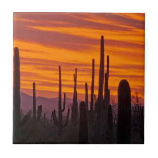 Carreau Saguaro, coucher du soleil, parc national de