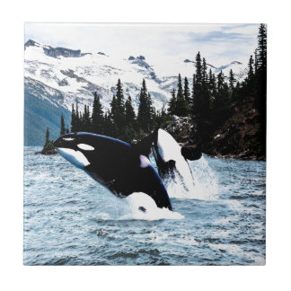 Carreau Saut de l'orque