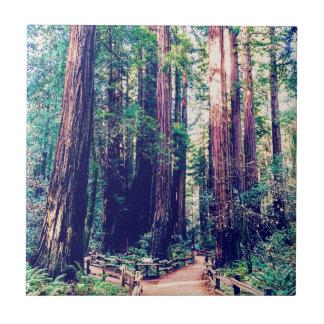 Carreau Séquoias de Californie