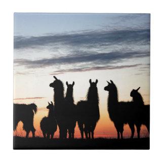 Carreau Silhouette de lama de prairie