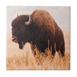 Carreau Troupeau de bison américain (bison de bison) dans