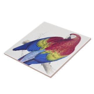 Carreau Tuile d'animal de faune d'oiseau de perroquet