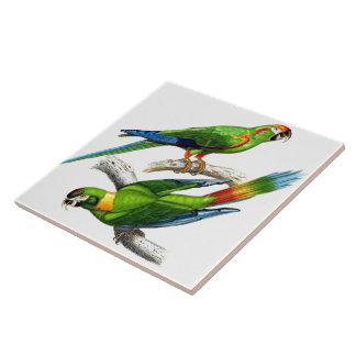 Carreau Tuile d'animal de faune d'oiseaux de perroquet