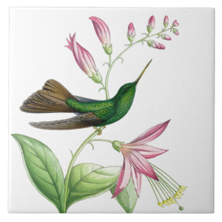 Carreau Tuile des colibris de Goulds