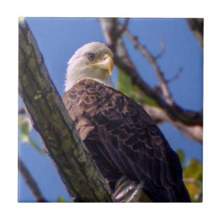 Carreau Tuile en céramique chauve de photo d'Eagle
