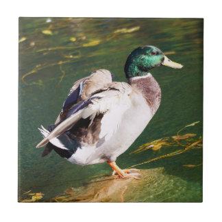 Carreau Tuile en céramique de photo de canard de Mallard