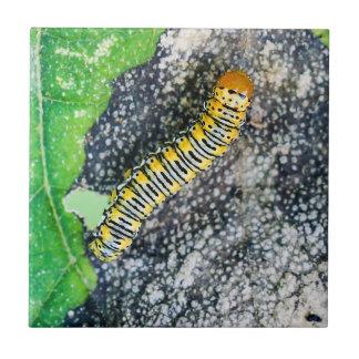 Carreau Tuile en céramique de photo de Caterpillar de mite