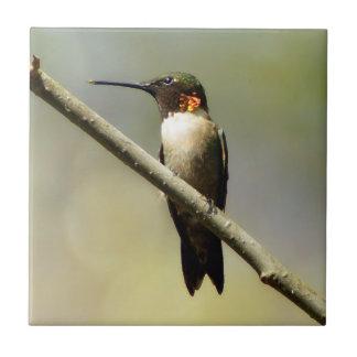 Carreau Tuile en céramique de photo de colibri Throated