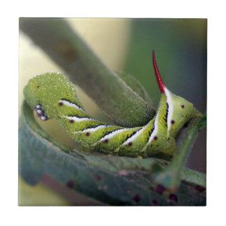 Carreau Tuile en céramique de photo de Hornworm