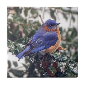 Carreau Tuile en céramique de photo d'oiseau bleu oriental