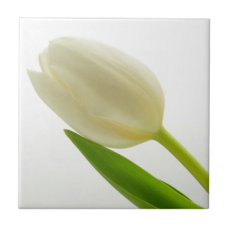 Carreau Tulipe blanche simple