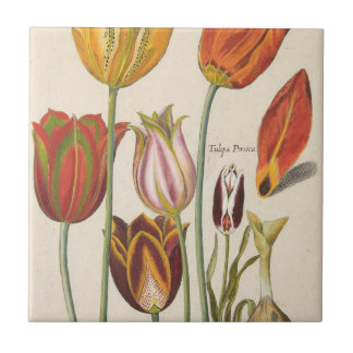 Carreau Tulipes