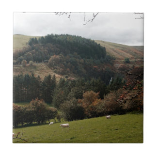 Carreau Vallée Pays de Galles de fanion