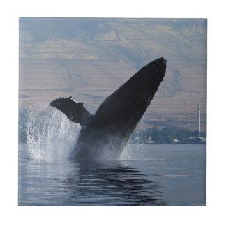 Carreau violation de baleine de humback