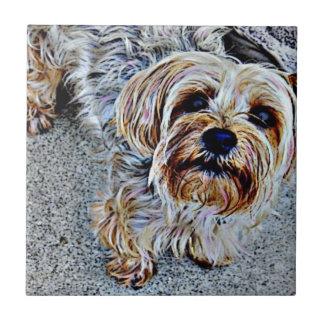 Carreau Yorkie Yorkshire Terrier coloré