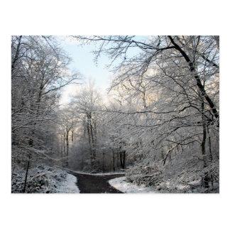 Carrefours de forêt d hiver cartes postales