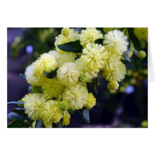 Carte Acacia - Mimosa