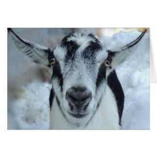 Carte alpine de chèvre