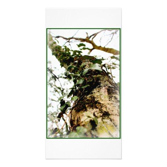 carte blanc photo floue nature arbre tronc lierre