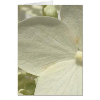 Carte blanche de fleur d'hortensia de Lacecap