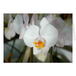 Carte blanche d'orchidée de mite