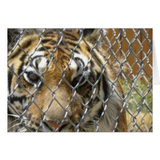 Carte clôturée de tigre (h)