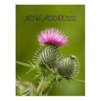 Carte d'adresse de fleur de chardon nouvelle
