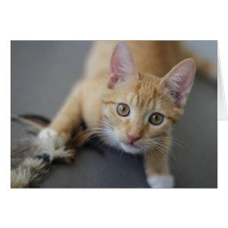 Carte d'anniversaire de chaton par le foyer pour
