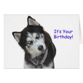 Carte d'anniversaire de chien de traîneau sibérien