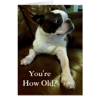 Carte d'anniversaire drôle de Boston Terrier