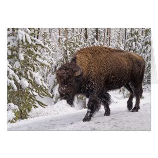 Carte de bison américain (bison de bison)