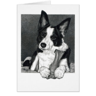 "Carte de border collie - ""pie """