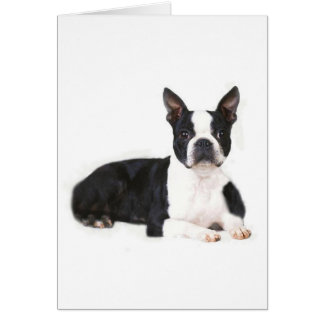 Carte de Boston Terrier