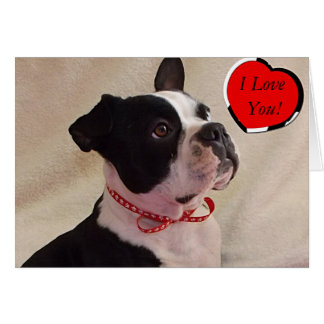 Carte de Boston Terrier Valentine