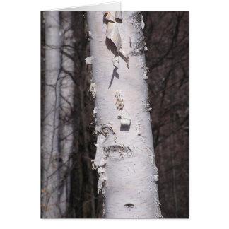 Carte de bouleau blanc (papyrifera de bétula)