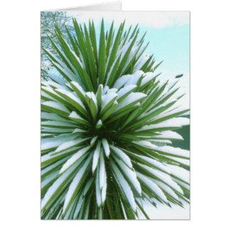 Carte de cactus de Milou