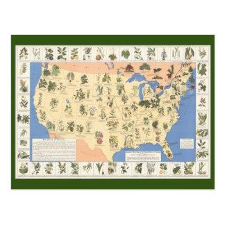 Carte de carte postale de fines herbes de remèdes
