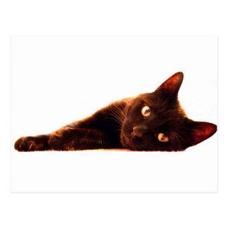 Carte de chat