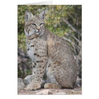 Carte de chat sauvage de désert