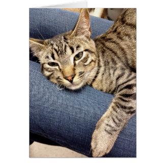 Carte de chat tigré de gris argenté de délivrance