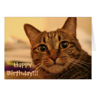 Carte de chat tigré de joyeux anniversaire