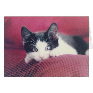 Carte de chaton
