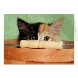 Carte de chaton de calicot de délivrance de chat