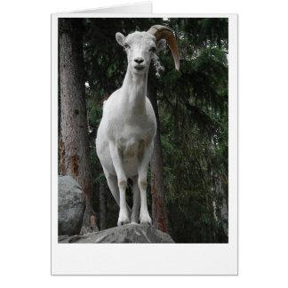 Carte de chèvre de montagne