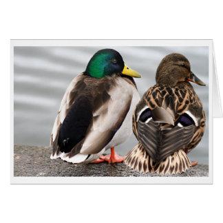 Carte de couples de canard de Mallard