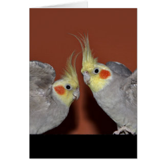 Carte de duo de Cockatiel