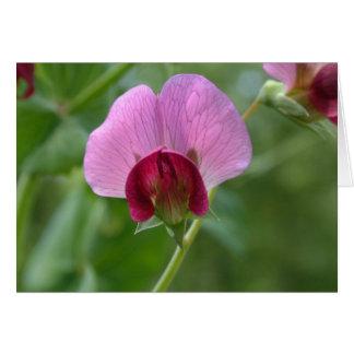 Carte de fleur de pois instantané de sucre